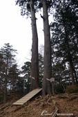 紅葉飄飄15日東京自由行--御岳山:●管理單位貼心的在夫婦杉間架起了一個小小階梯,可以前往站上台階拍照留念.JPG