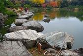 紅葉飄飄15日東京自由行--清澄庭園內的奇石及渡池石塊:08.JPG