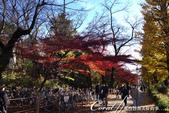 紅葉飄飄15日東京自由行--大学通り:10●落葉、紅磚道與自行車,果然是文教區標準的視覺印象.JPG