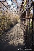 紅葉飄飄15日東京自由行--雖滿園蕭瑟卻也難掩風雅的向島百花園:19●若要品味花語是害羞與沈思的胡知子有多麼秀麗清新,要找個時間再訪,屆時同時來領略「秋之七草」.JPG