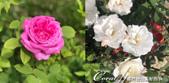 2019Amazing!穿越古絲路上的中亞五國之旅(11-3)--土庫曼斯坦之獨立紀念碑:02●偌大的廣場裡種滿綠色植物,還有早開的玫瑰花.png