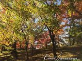 殿ヶ谷戸庭園的深秋楓葉,如火如荼、如烈燄灼燒一般無窮盡的美麗:10.JPG