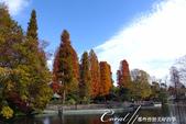 紅葉飄飄15日東京自由行--井之頭恩賜公園:07●從林間小徑,赫然轉折出一副副無與倫比的池畔美景.JPG