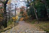 ●成田山公園充滿逸趣的小徑:DSC08404.JPG
