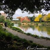 紅葉飄飄15日東京自由行--清澄庭園:30●欣賞池中的魚、水上的鴨和倒映在水中的樹,是來此庭園的一大樂事09.JPG