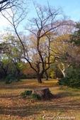 坐在小石川植物園內的樹下賞秋吧:01.JPG