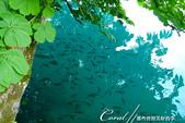 2018不思議之克、斯、義秘境歐遊記(6~4)--閃耀綠寶石光芒的布雷得湖 Lake Bled 與高:29●由於水質純淨,水中也有很多的魚.JPG