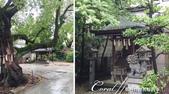 2017初夏14日自由行:●有兩隻石獅子端坐在前的金刀比羅神社.JPG