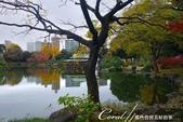 紅葉飄飄15日東京自由行--清澄庭園:32●池中,營造出濃濃日式風情的茶屋.JPG