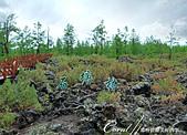 2019夏季內蒙草原風光與貝加爾湖詩意之約(5)--詩意盎然的阿爾山國家森林公園:11●經過千年風化和流水沖刷的死火山玄武岩,形成難得一見的石塘林自然地貌.JPG