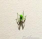 2018不思議之克、斯、義秘境歐遊記(6~1)--四星級 Hotel Jama 意外訪客驚魂記:16●天啊!這不是在做夢吧?這隻顏色詭異的大蜘蛛竟然在床頭邊的牆上,是看著我多久了?.JPG