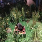 2018印象翻轉的俄羅斯奇幻之旅(2-6)--俄式牧場創意料理的新風味:12●餐廳蓄養的小動物,個個毛色柔亮建康,且環境非常乾淨.JPG