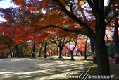 紅葉飄飄15日東京自由行--殿ヶ谷戸庭園:16●園區內較高處屬西式風格的寬闊草坪,與低處以次郎弁天池為中心的日式庭園,構成日西合璧獨特風貌.JPG