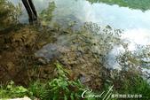 2018不思議之克、斯、義秘境歐遊記(2~2)--普萊維斯國家公園N.P. Plitvice仙境傳說:38●寧靜的水畔,彷佛明鏡,倒映內心世界.JPG