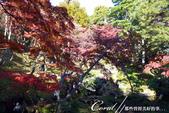 紅葉飄飄15日東京自由行--殿ヶ谷戸庭園:22●高低錯落的崖間,種植了赤松、楓樹與竹,顯現了多重生態下相互輝映的美貌.JPG