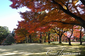 殿ヶ谷戸庭園的深秋楓葉,如火如荼、如烈燄灼燒一般無窮盡的美麗:01.JPG