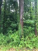 神鍋高原熔岩流處處是風景:IMG_4998.JPG