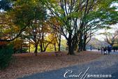 紅葉飄飄15日東京自由行--國營昭和紀念公園:47●很快地;藍天收起它的顏色,光線也漸暗下來.JPG