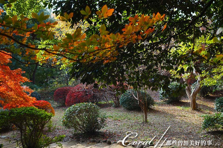 紅葉飄飄15日東京自由行--我在小石川植物園:04●朝著指標方向,踏著石階,穿過與上半場風情截然不同的林蔭,前往日式庭園.JPG
