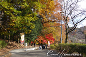 紅葉飄飄15日東京自由行--寶登山尋寶趣:57●像是從山頂充了電下山一般,回程的山路腳步輕快自在.JPG