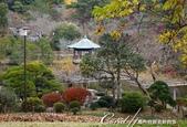 ●成田山公園充滿逸趣的小徑:DSC08415.JPG