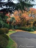 紅葉飄飄15日東京自由行--閃耀著童話森林般迷人色彩的小石川植物園:12●繽紛又精彩的植物羅列柏油路的兩旁.JPG