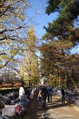 紅葉飄飄15日東京自由行--大学通り:08●落葉、紅磚道與自行車,果然是文教區標準的視覺印象.JPG