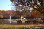 紅葉飄飄15日東京自由行--代代木公園:22●長椅上;有我今生最難忘的秋的回憶.JPG