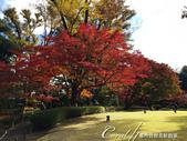紅葉飄飄15日東京自由行--大田黑公園:21●圍繞池邊的散步道,讓人流漣忘返.JPG
