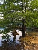 2018不思議之克、斯、義秘境歐遊記(2~2)--普萊維斯國家公園N.P. Plitvice仙境傳說:46●搭乘遊船的碼頭.JPG