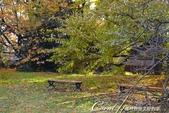 紅葉飄飄15日東京自由行--我在小石川植物園:34●池邊也有不少可以歇坐的地方.JPG