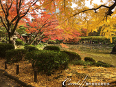 紅葉飄飄15日東京自由行--日比谷公園之美不勝收雲形池:●猶如置身風景名信片中一般夢幻.JPG