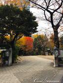 紅葉飄飄15日東京自由行--愛宕神社:16●小小神社內的秋之意境.JPG