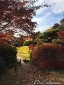紅葉飄飄15日東京自由行--我在小石川植物園:41●在日本庭園的區塊內,各異奇趣的小徑也特別多,隨意走走,也有不同風光01.JPG