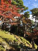 紅葉飄飄15日東京自由行--殿ヶ谷戸庭園:26●高低錯落的崖間,種植了赤松、楓樹與竹,顯現了多重生態下相互輝映的美貌.JPG