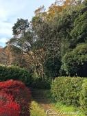 紅葉飄飄15日東京自由行--我在小石川植物園:48●在日本庭園的區塊內,各異奇趣的小徑也特別多,隨意走走,也有不同風光.JPG