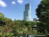 從慶澤園的不同角度欣賞阿倍野HARUKAS:IMG_9634.JPG