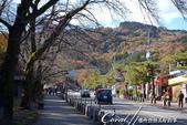 紅葉飄飄15日東京自由行--寶登山尋寶趣:06●走在樹下,非常的有Fu.JPG