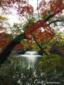 紅葉飄飄15日東京自由行--井之頭恩賜公園:17●湖水、步道、與紅葉所交織成的獨特景色,隨處所至皆有不同意趣.JPG