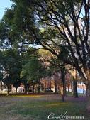 紅葉飄飄15日東京自由行--水光雲影、秋色無邊的水元公園:18●在沿著水域漫走的同時,孩童在對岸遊戲區的歡叫聲,一度打斷聆聽鳥語的意興,這也才驚覺,走了一段不算短的時