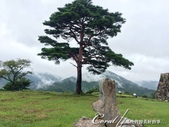 初秋記遊之遺世獨立的竹田城遺跡:●不知今年貴庚的老松樹.JPG