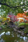 紅葉飄飄15日東京自由行--清澄庭園內的奇石及渡池石塊:06.JPG