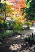 紅葉飄飄15日東京自由行--我在小石川植物園:03●朝著指標方向,踏著石階,穿過與上半場風情截然不同的林蔭,前往日式庭園.JPG