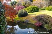 紅葉飄飄15日東京自由行--我在小石川植物園:13●被繽紛色彩環抱著的一池靜靜地、盛裝著零星落葉,及倒影著天空的秋水於小徑的盡頭映入眼簾.JPG