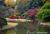 紅葉飄飄15日東京自由行--我在小石川植物園:24●當然,欣賞美麗的風景一定少不了沿著池子漫步一圈.JPG