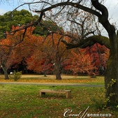 坐在小石川植物園內的樹下賞秋吧:13.JPG