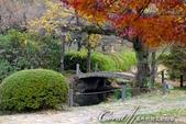 紅葉飄飄15日東京自由行--我在小石川植物園:26●當然,欣賞美麗的風景一定少不了沿著池子漫步一圈.JPG