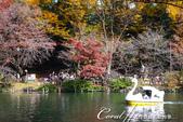 井之頭恩賜公園內的人氣設施─天鵝船:DSC06960.JPG
