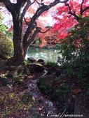 紅葉飄飄15日東京自由行--我在小石川植物園:39●當然,欣賞美麗的風景一定少不了沿著池子漫步一圈.JPG