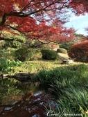 紅葉飄飄15日東京自由行--我在小石川植物園:29●當然,欣賞美麗的風景一定少不了沿著池子漫步一圈.JPG